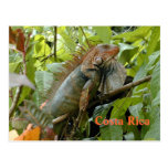 iguana, costa, rica