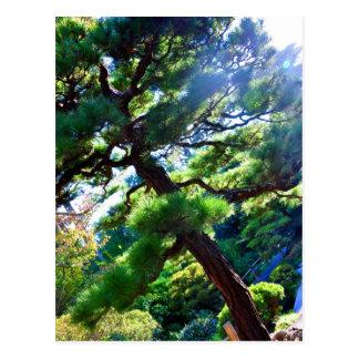 Postcard Japanese Tea Garden tree