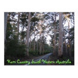 POSTCARD - Karri Country South Western Australia