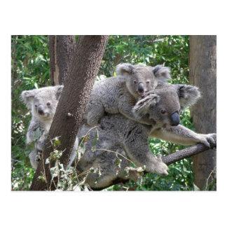 Postcard Koala QLD Australia Postcard