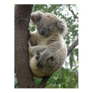 Postcard Koalas QLD Australia Postcard