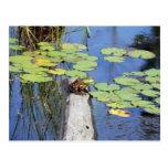 Postcard - Lily Pad Frog