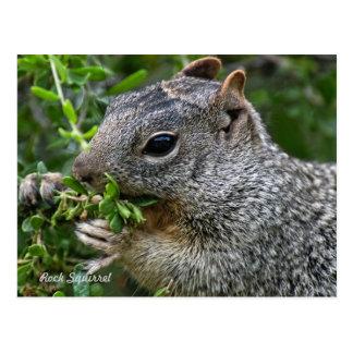 Postcard: Munchy Squirrel Postcard