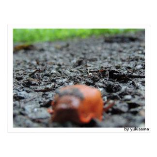 Postcard - naked snail