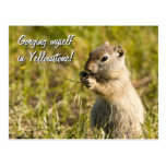 Postcard of ground squirrel eating, custom text