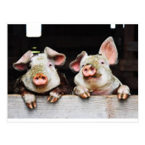 Postcard of happy pigs