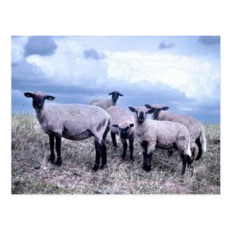 Postcard of sheep Deern vun Diek