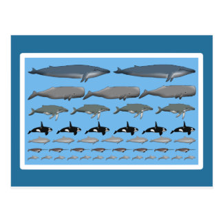 """Postcard of """"whales """""""
