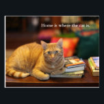 "Postcard Orange Cat<br><div class=""desc"">Say it with a postcard of an orange cat with text that says: Home is where the cat is.   About the photo This is Oscar. He&#39;s a rescue cat. When he is not busy trying to escape the house he enjoys watching his humans closely.</div>"