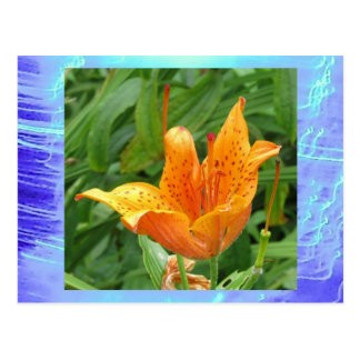 Postcard - Orange Orchid