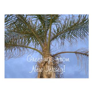 Postcard Palm Tree Greetings from NJ