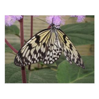 Postcard - Paper Kite Butterfly
