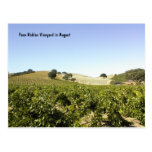 Postcard: Paso Robles Vineyard in August
