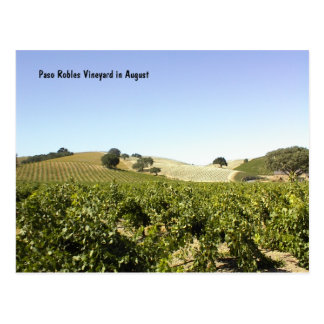 Postcard: Paso Robles Vineyard in August Postcard