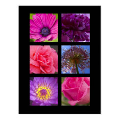 Postcard - Pink Purple Flowers
