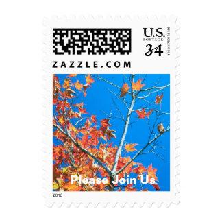 Postcard Please Join Us Autumn Weddings Fall Weddi Postage Stamps