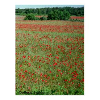 Postcard Poppie fields  from Gotland Sweden