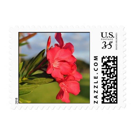 POSTCARD postage- Amazing Flower Stamp