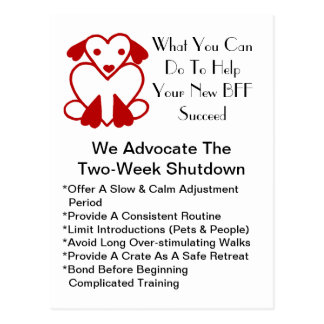Postcard Promo Advocate For Successful Pet Adopt