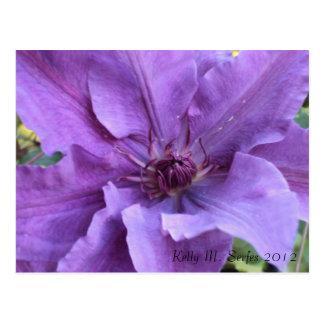 Postcard - Purple Clematis
