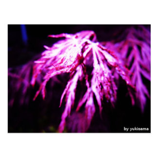 Postcard - purple plant at night