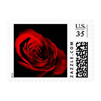 Postcard Red Rose Black Background Postage