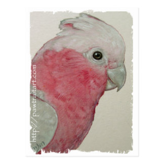 Postcard - Rose Breasted Cockatoo