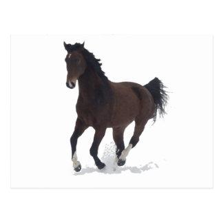 Postcard - running Horse
