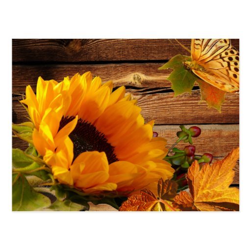 Postcard, Rustic Country Fall Sunflower Butterfly | Zazzle