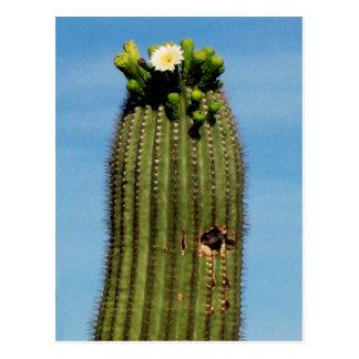Postcard Sahuaro cactus in bloom