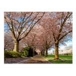 Postcard Salem Blossoms Cherry & Squirrel Oregon