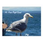Postcard:  Seagull #1