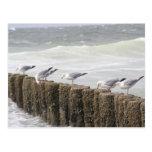 Postcard: Seagulls