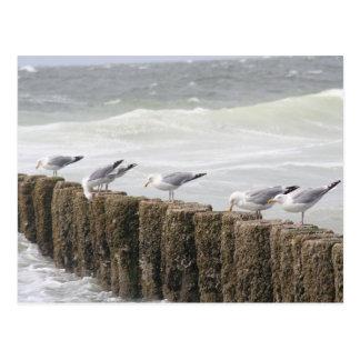 Postcard: Seagulls Postcard