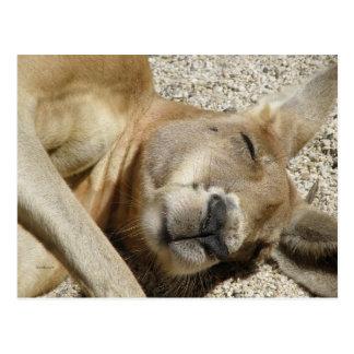 Postcard Sleeping Kangaroo QLD Australia Postcard