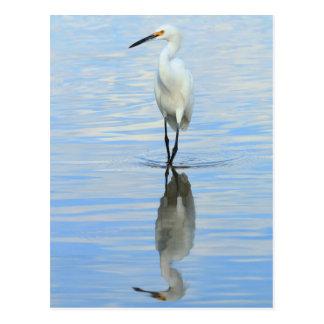 Postcard - Snowy egret turning