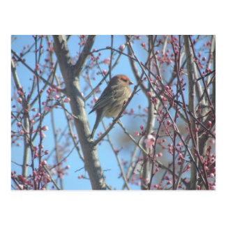 Postcard - Spring Perch