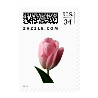 Postcard Spring Pink Tulip Wedding Gift Postage