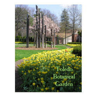 postcard/TOLEDO BOTANICAL GARDEN/YELLOW TULIPS Postcard