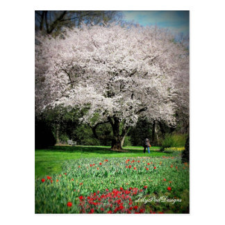 Postcard Tree Flowering Crabapple with red Tulips