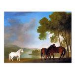 Postcard: Two Bay Mare & a Grey  Pony Postcard