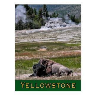 Postcard: Upper Geyser Basin Sentinel Postcard