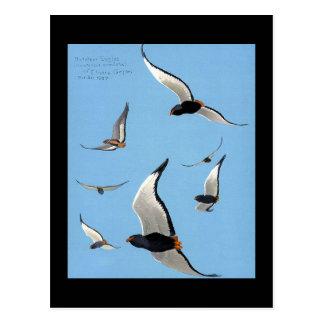 Postcard-Vintage Chicago Art-Abyssinian Birds 13