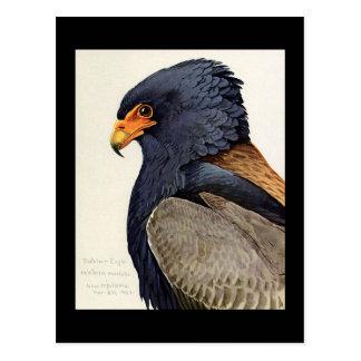 Postcard-Vintage Chicago Art-Abyssinian Birds 18