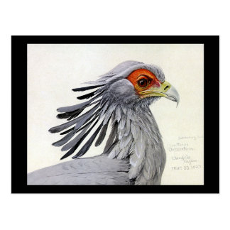 Postcard-Vintage Chicago Art-Abyssinian Birds 19 Postcard