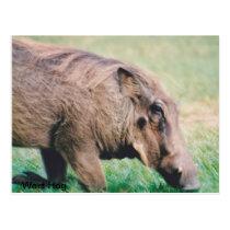 Postcard Warthog