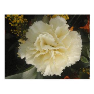 Postcard White Carnation Beauty