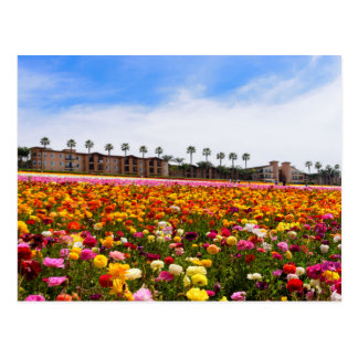 Postcard Wildflowers in Carlsbad
