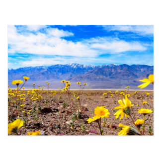 Postcard Wildflowers in Death Valley NP