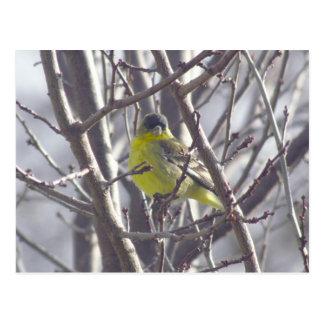 Postcard - Winter Bird